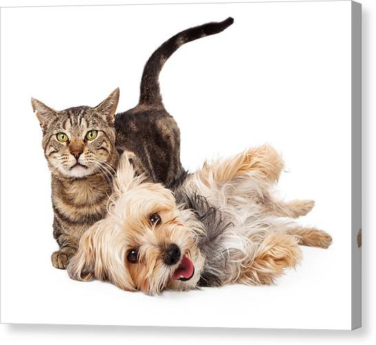 Playful Dog And Cat Laying Together Canvas Print