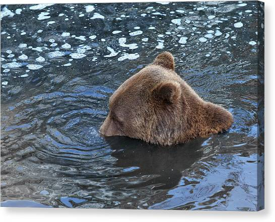 Playful Submerged Bear Canvas Print