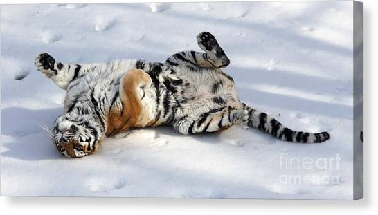 Playful Tiger Canvas Print