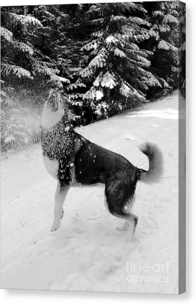 Dogs In Snow Canvas Print - Playing In The Snow by Carol Groenen