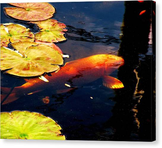 Canvas Print featuring the photograph Playing Koi by Kim Bemis
