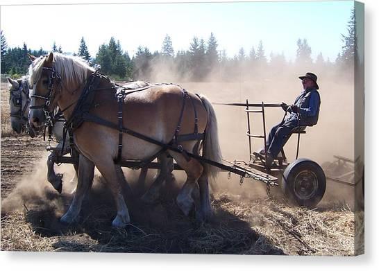 Plough Horses At Work Canvas Print