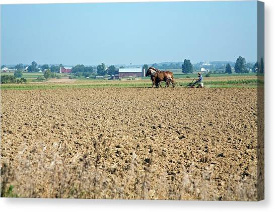 Ploughing On An Amish Farm Canvas Print by Jim West