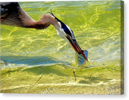 Plucked From The Sea Canvas Print