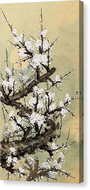 Plum Blossom Canvas Print by Vii-photo