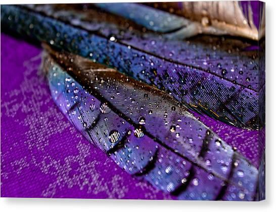 Plum Plumage Canvas Print