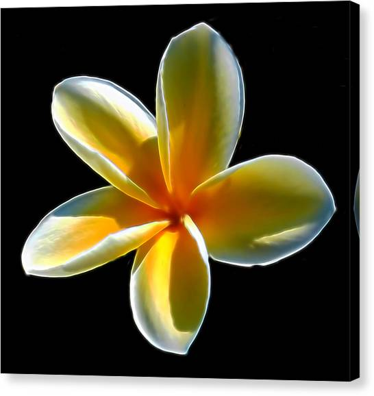 Plumeria Against Black Canvas Print