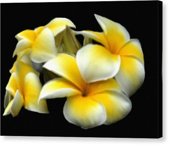 Plumeria Yellow And White Canvas Print