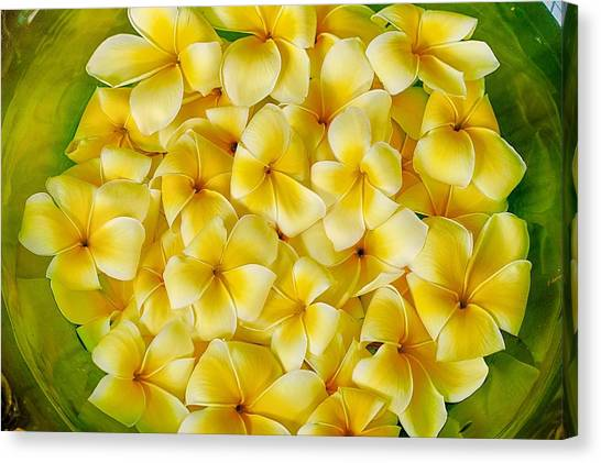 Plumerias In Bowl Canvas Print