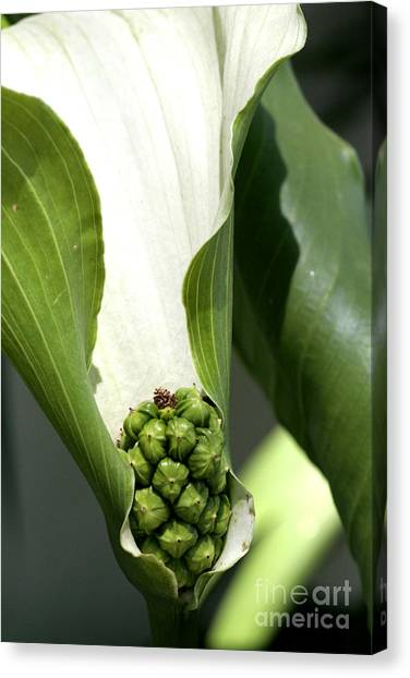 Pocket Of Foliage Canvas Print by Laura Paine