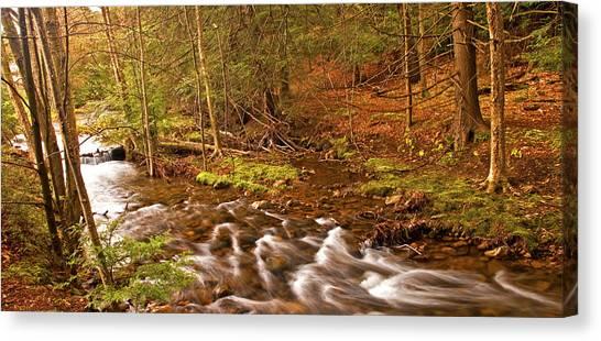Pocono Mountain Stream Pennsylvania Canvas Print by A Gurmankin