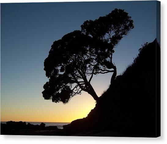 Pohutukawa Trees At Sunrise Canvas Print