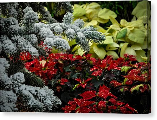 Poinsettia Garden Canvas Print