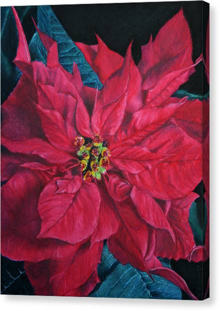 Poinsettia II Painting Canvas Print