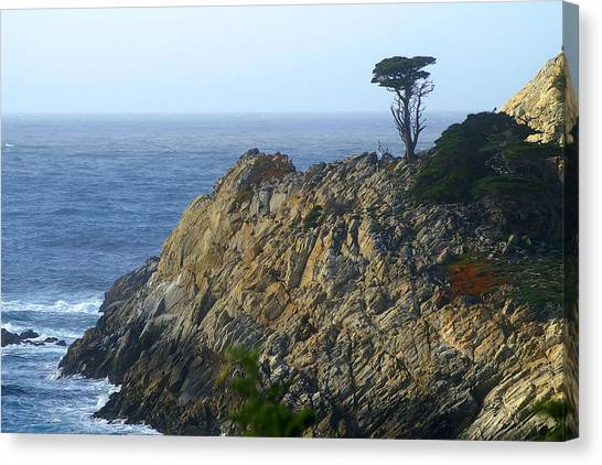 Point Lobos Cypress Canvas Print
