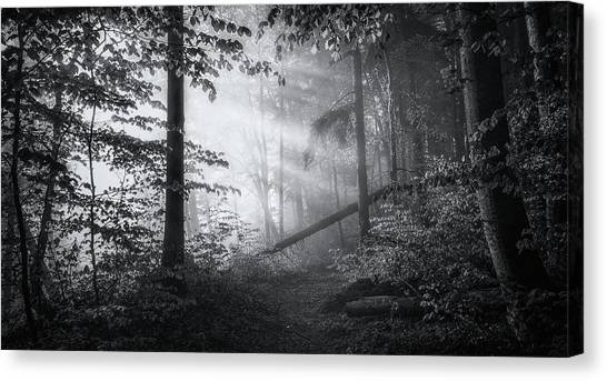 Forest Paths Canvas Print - Point Of No Return ... by Norbert Maier