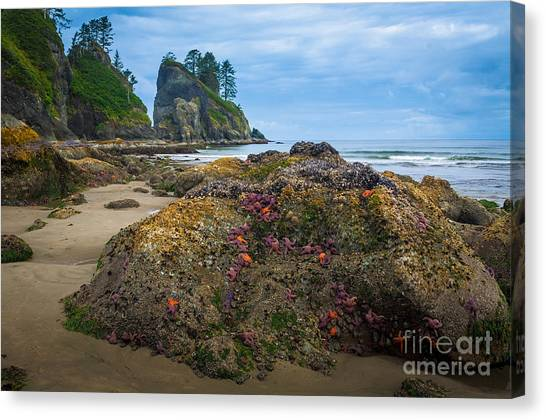 Olympic Peninsula Canvas Print - Point Of The Arches Beach by Inge Johnsson