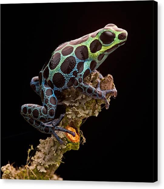 Amazon Rainforest Canvas Print - poison arrow frog Peru rain forest by Dirk Ercken
