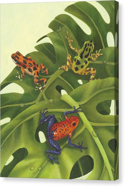 Frogs Canvas Print - Poison Pals by Laura Regan