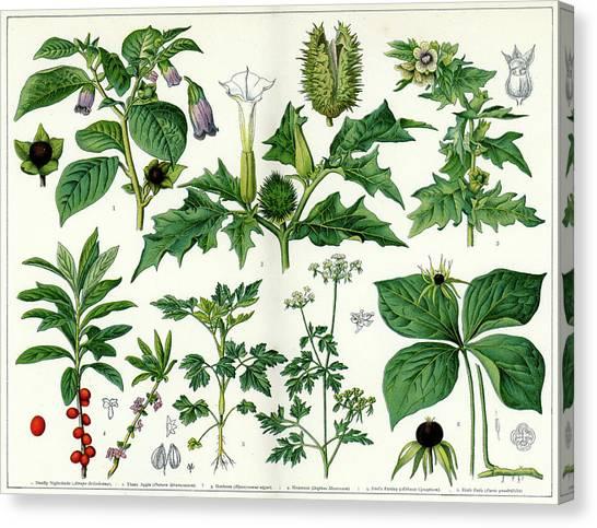 Printmaking Canvas Print - Poisonous Plants by Duncan1890