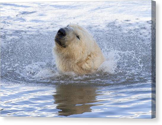 Polar Bear Canvas Print by Andrew Dernie