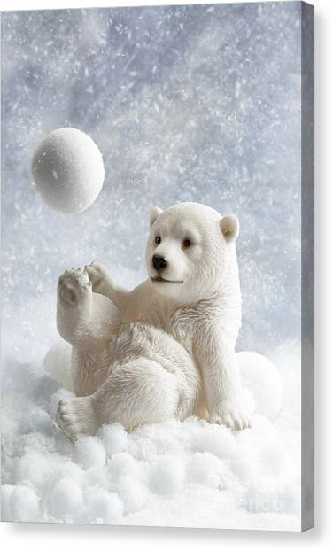 Snowball Canvas Print - Polar Bear Decoration by Amanda Elwell