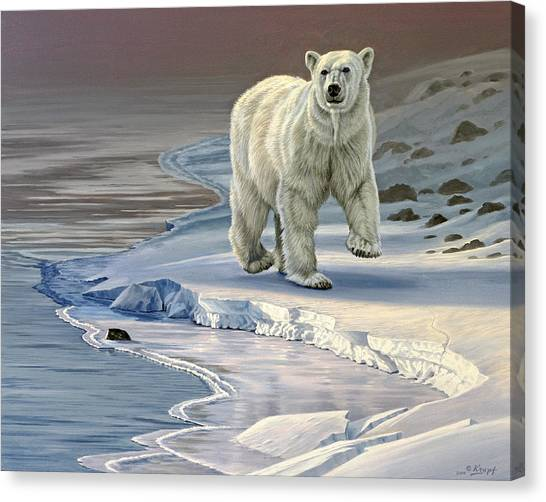 Polar Bears Canvas Print - Polar Bear On Icy Shore    by Paul Krapf