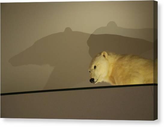 Polar Bear Shadows Canvas Print