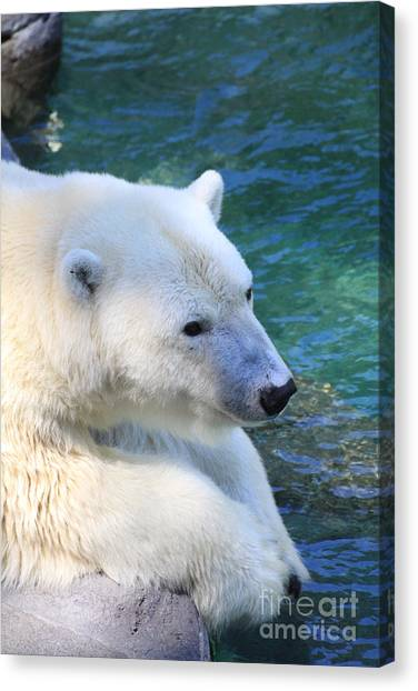 Polar Pal Canvas Print