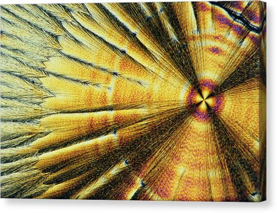 Biochemistry Canvas Print - Polarised Lm Of Crystals Of Vitamin C by Sinclair Stammers.