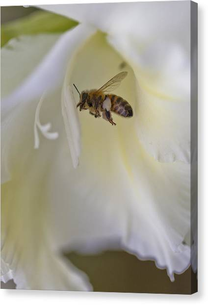 Pollen Carrier Bee Canvas Print