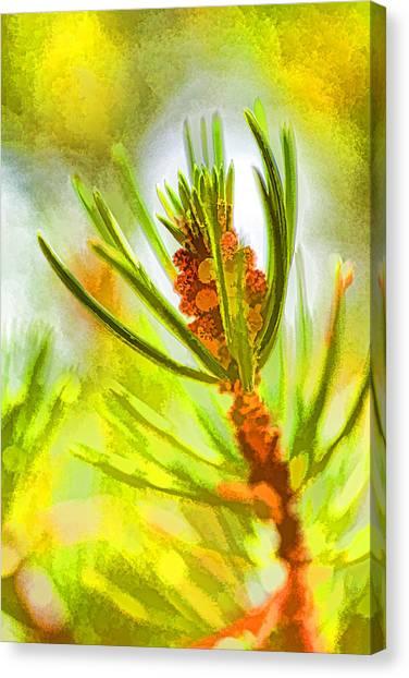 Pollen Cones Canvas Print