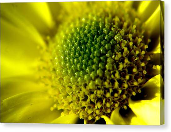 Pollen Factory Canvas Print