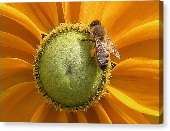 Pollen Time Canvas Print