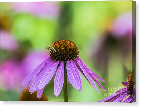 Pollen Tracks... Canvas Print