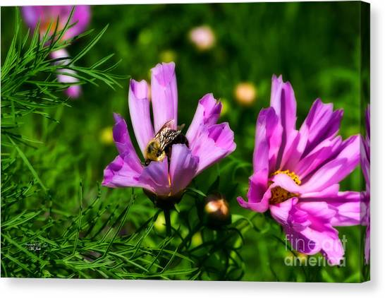 Pollinating Flowering Canvas Print