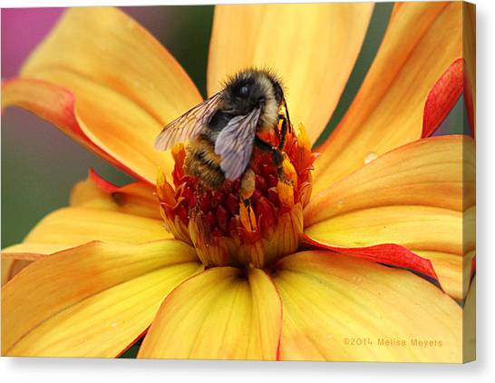 Pollinator  Canvas Print by Melisa Meyers