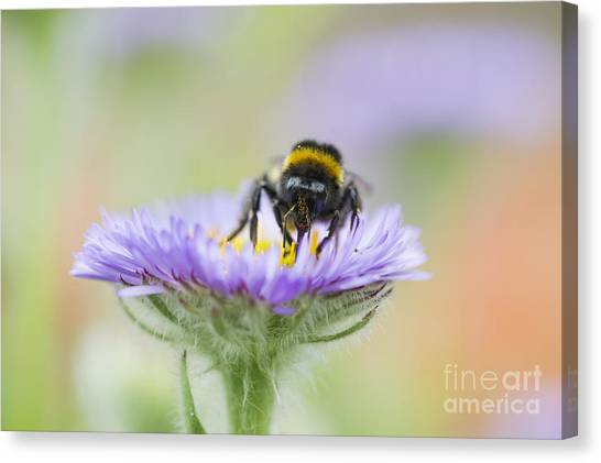 Pollinator Canvas Print - Pollinator  by Tim Gainey