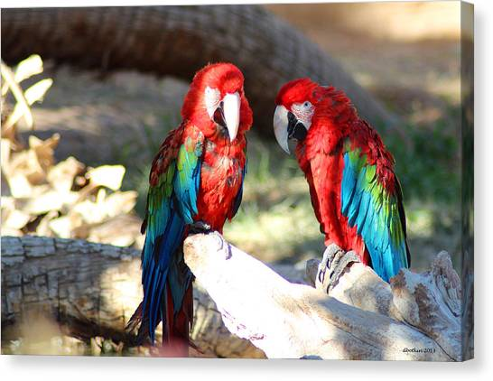 Polly And Pauly Canvas Print by Dick Botkin