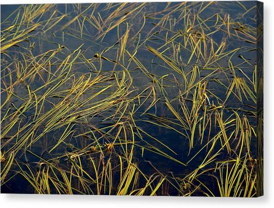 Pond Grass Canvas Print by Marv Russell