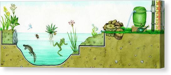 Newts Canvas Print - Pond Habitat by Lizzie Harper/science Photo Library