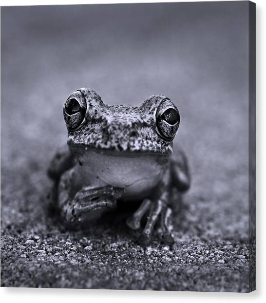 Frogs Canvas Print - Pondering Frog Bw by Laura Fasulo