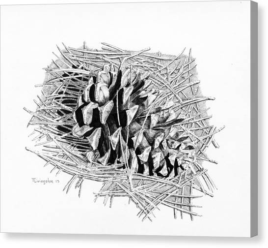 Ponderosa Pine Cone Canvas Print