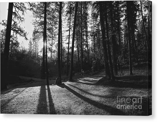 Ponderosa Shadows Canvas Print