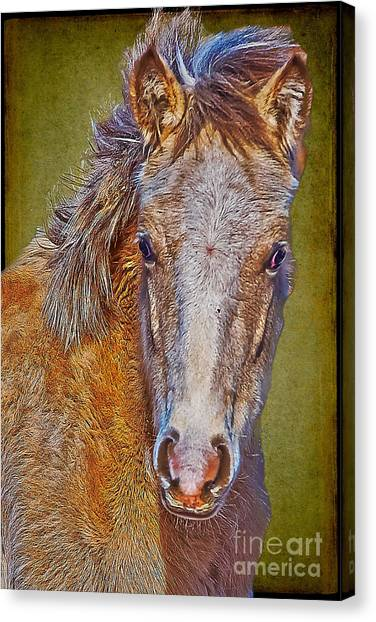 Pony Portrait  Canvas Print