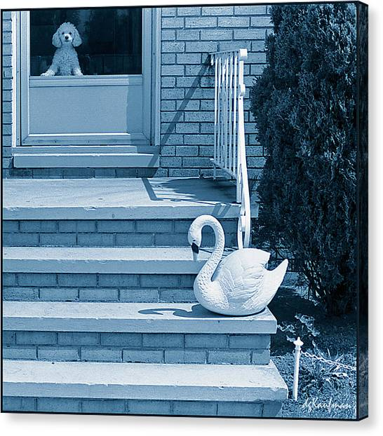 Poodle And Swan Canvas Print