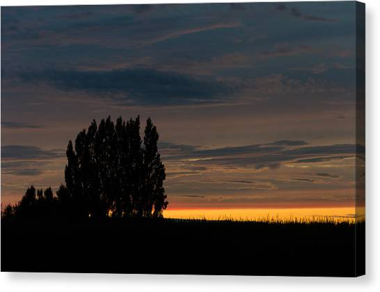 Poplars Flanders Sunset Canvas Print