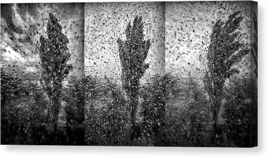 Poplars In The Storm Canvas Print