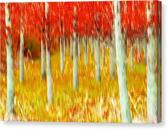 Poplars Canvas Print
