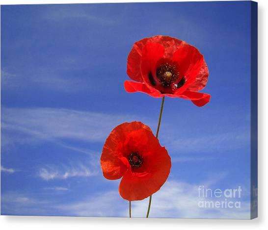 Poppies 02 Canvas Print by Giorgio Darrigo